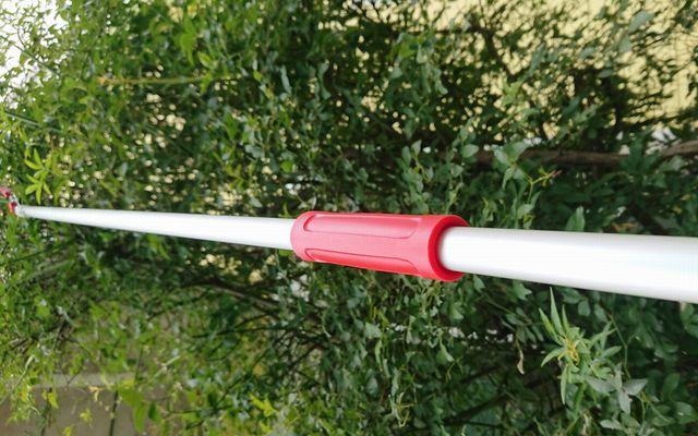 rosa-banksiae5-2